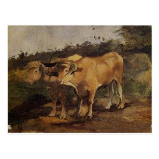 Two Bulls Wearing a Yoke by Henri de Toulouse-Laut Postcard
