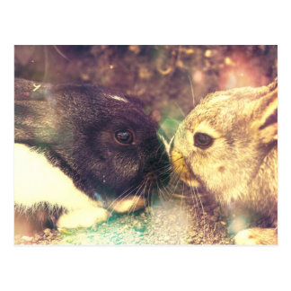 Two Bunnies, Rabit Photograph, Purple Magical Postcard