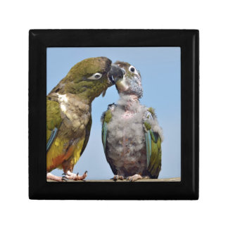 Two Burrowing Parrots Jewelry Box