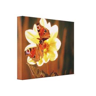Two Butterflies On Flower Canvas Print