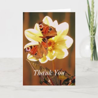 Two Butterflies On Flower Thank You Card