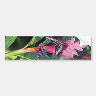 Two Butterflies on Pink Flower Bumper Sticker