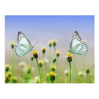 Two butterflies, two flowers postcard