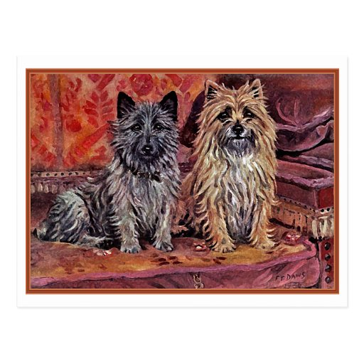 Two Cairn Terriers Post Card
