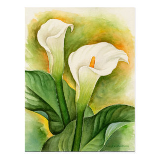 Two Cala Lilies Watercolor Art - Multi Post Cards