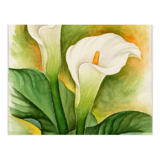 Two Cala Lilies Watercolor Art - Multi Postcard