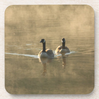 two canada geese swimming on the river by sunrise beverage coaster