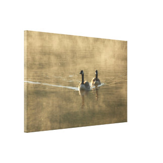 two canada geese swimming on the river by sunrise canvas print
