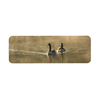 two canada geese swimming on the river by sunrise label