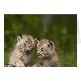 Two Canada Lynx Kittens Playing On A Log Card