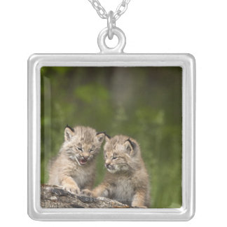 Two Canada Lynx (Lynx Canadensis) Kittens Square Pendant Necklace