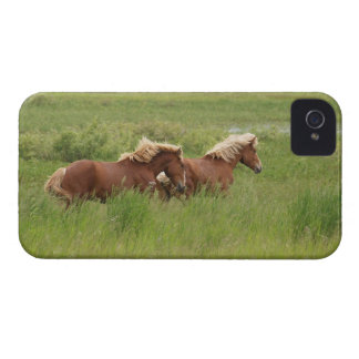 Two Cantering Palomino Horses in a Field Photo iPhone 4 Cases