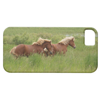 Two Cantering Palomino Horses in a Field Photo iPhone 5 Covers