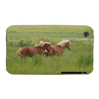 Two Cantering Palomino Horses in a Field Photo Case-Mate iPhone 3 Case