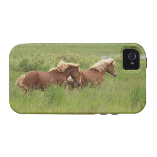 Two Cantering Palomino Horses in a Field Photo Vibe iPhone 4 Cover