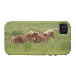Two Cantering Palomino Horses in a Field Photo Case For The iPhone 4