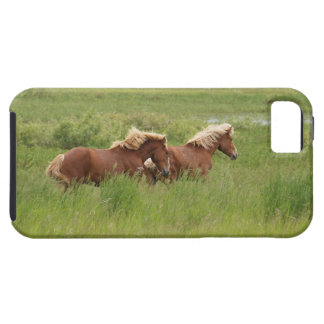 Two Cantering Palomino Horses in a Field Photo iPhone SE/5/5s Case