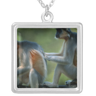 Two capped langurs (Presbytis pileatus) sitting Silver Plated Necklace