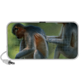 Two capped langurs (Presbytis pileatus) sitting iPhone Speaker