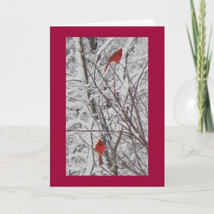 Two Cardinals Red Border 5x7 Christmas Card Zazzle Com