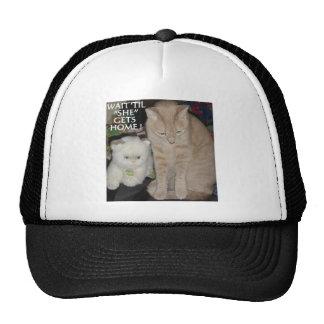 TWO CATS AGAIN TRUCKER HAT