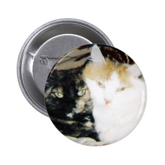 Two Cats Cheek to Cheek Pinback Button