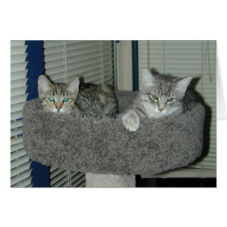Two cats in the kitty condo card