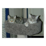 Two cats in the kitty condo greeting cards