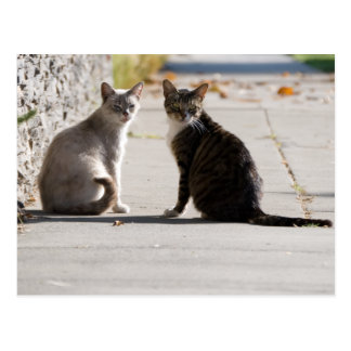 Two Cats in the Sun Postcards