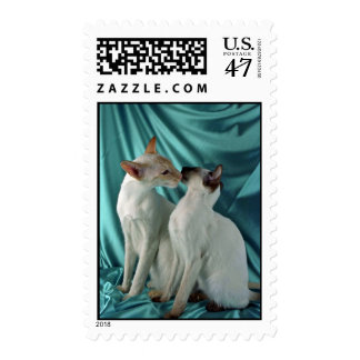 Two Cats Kissing Postage Stamp
