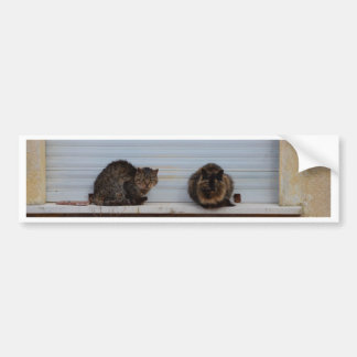 Two Cats On A Window Ledge Bumper Sticker