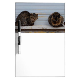 Two Cats On A Window Ledge Dry Erase White Board