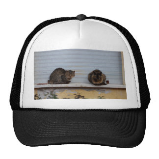 Two Cats On A Window Ledge Mesh Hats