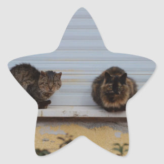 Two Cats On A Window Ledge Star Sticker
