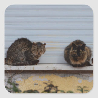 Two Cats On A Window Ledge Sticker
