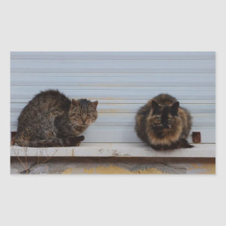 Two Cats On A Window Ledge Rectangular Stickers