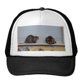 Two Cats On A Window Ledge Trucker Hat
