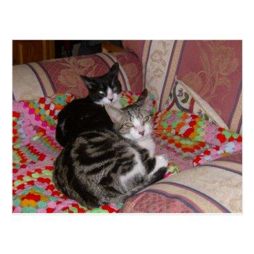 Beach Themed Two cats on cushion postcard