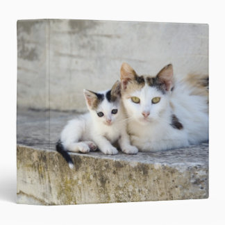Two cats on stone steps binder