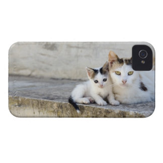 Two cats on stone steps iPhone 4 cases