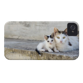 Two cats on stone steps iPhone 4 Case-Mate cases