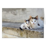 Two cats on stone steps greeting card
