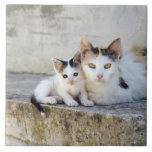 Two cats on stone steps large square tile