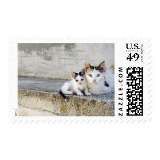 Two cats on stone steps postage stamp