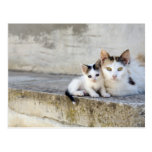 Two cats on stone steps postcard