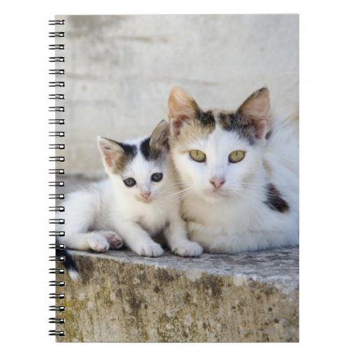 Two cats on stone steps spiral notebooks