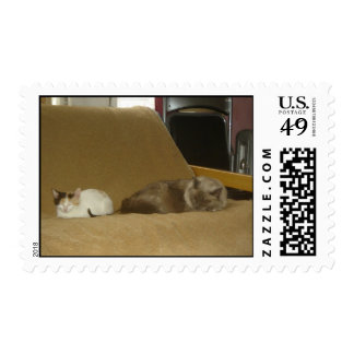 Two Cats Postage Stamp
