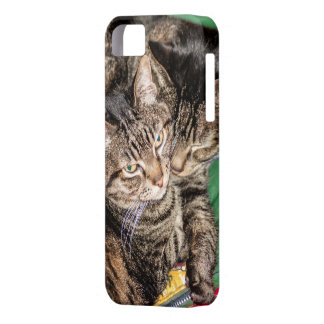 Two Cats Snuggling iPhone SE/5/5s Case