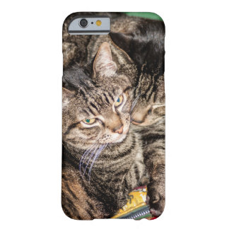 Two Cats Snuggling on a Colorful Sleeping Bag Barely There iPhone 6 Case