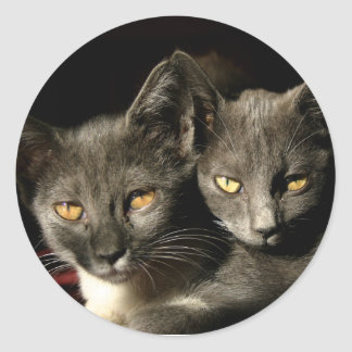 Two Cats Sticker